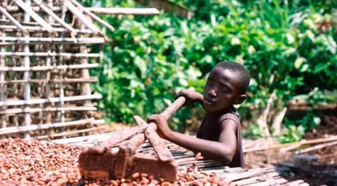 Какао-індустрія в Кот-д'Івуар