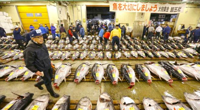 Знаменитий рибний ринок Цукідзі