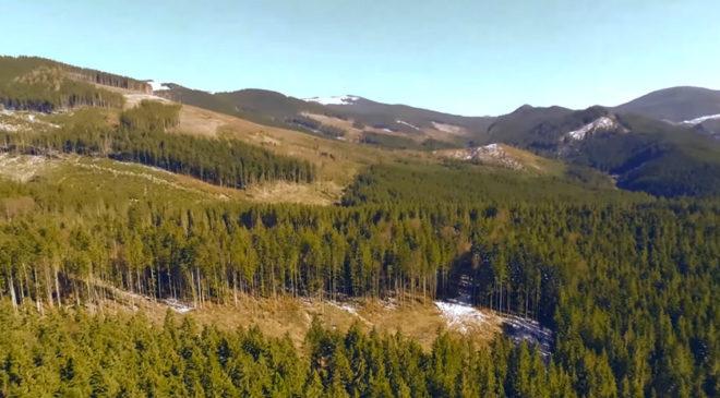 Армагедон дедалі ближче. Британський активіст про вирубку лісів в Україні