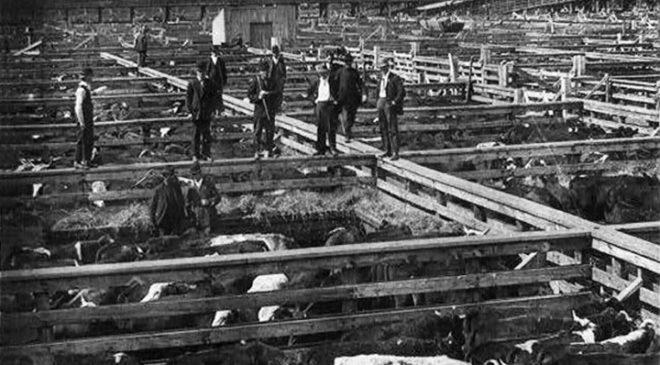 Загони для великої рогатої худоби на скотарні в Чикаго