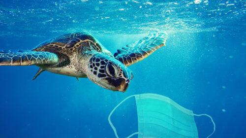 Маски забруднюють довкілля: як людська байдужість руйнує планету